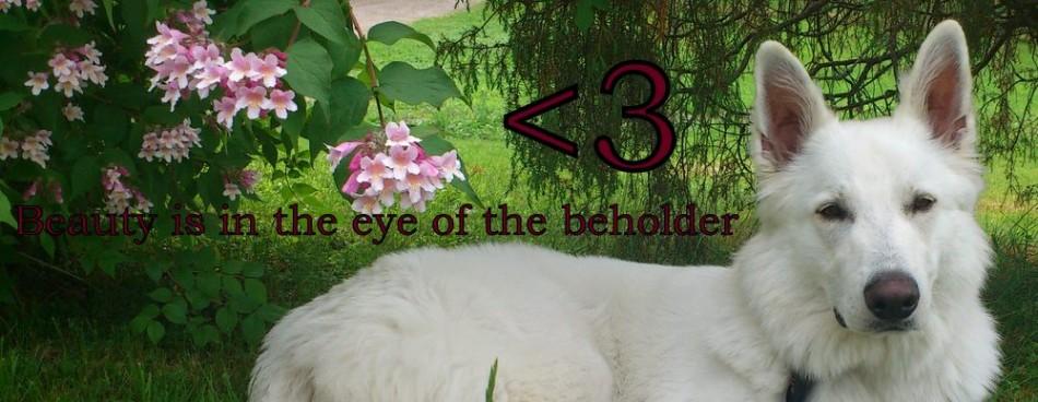 beauty-beholder